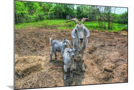 Goats-Robert Goldwitz-Mounted Photographic Print