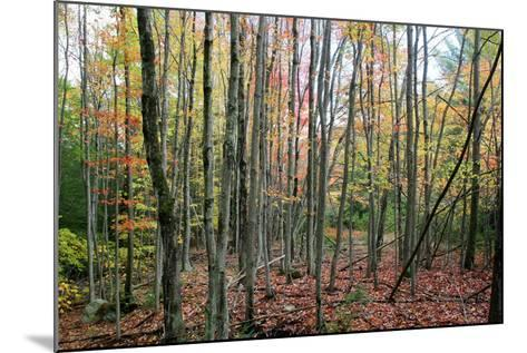 Grey Tree Stand Autumn-Robert Goldwitz-Mounted Photographic Print