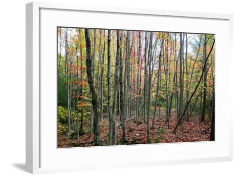 Grey Tree Stand Autumn-Robert Goldwitz-Framed Art Print