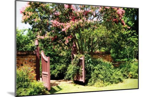 Crepe Myrtle I-Alan Hausenflock-Mounted Photographic Print