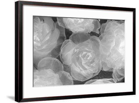 Rosas Blancas-Moises Levy-Framed Art Print