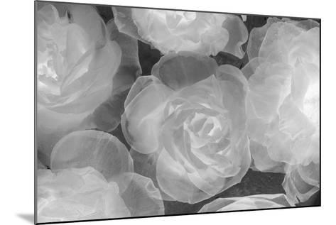 Rosas Blancas-Moises Levy-Mounted Photographic Print