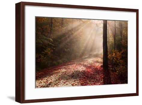 Light in the Forest-Michael Blanchette-Framed Art Print