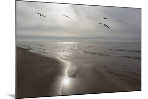 Five Birds, Grand Haven, Michigan '14 - Color-Monte Nagler-Mounted Photographic Print