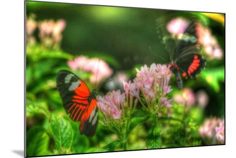 Butterfly 11-Robert Goldwitz-Mounted Photographic Print