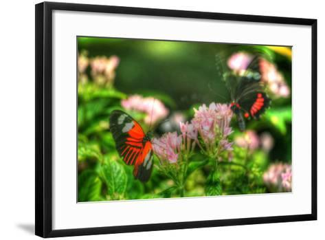 Butterfly 11-Robert Goldwitz-Framed Art Print