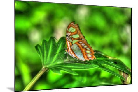 Butterfly 10-Robert Goldwitz-Mounted Photographic Print