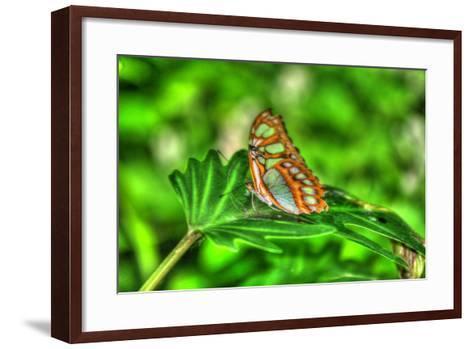 Butterfly 10-Robert Goldwitz-Framed Art Print