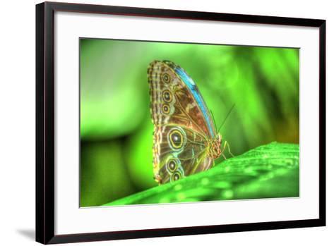 Butterfly 9-Robert Goldwitz-Framed Art Print