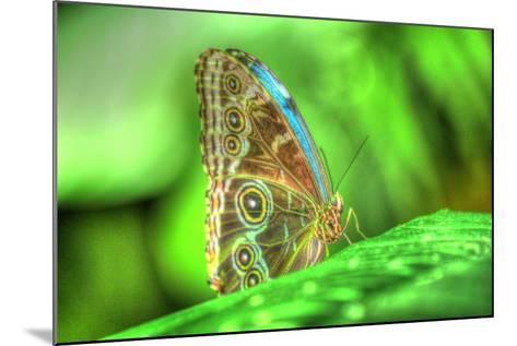 Butterfly 9-Robert Goldwitz-Mounted Photographic Print
