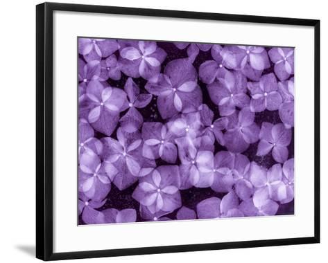 Flores Congeladas 200-Moises Levy-Framed Art Print
