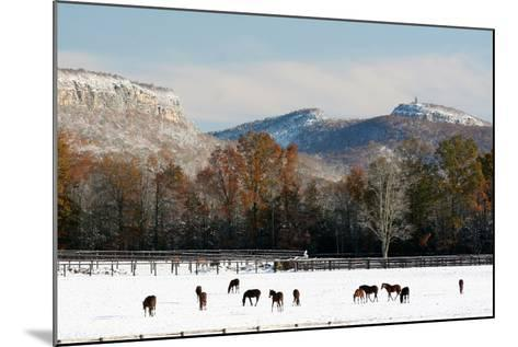 Early Snow Horse Paddock-Robert Goldwitz-Mounted Photographic Print
