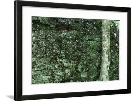 Tree Trunk Rock Wall-Robert Goldwitz-Framed Art Print