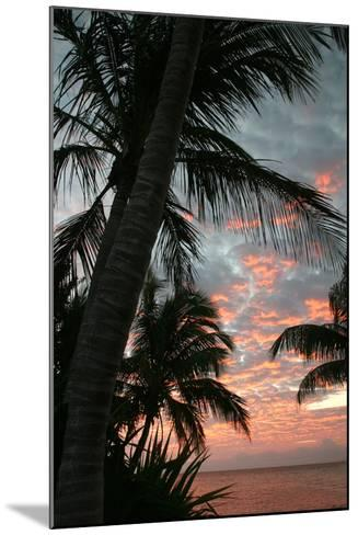 Palm Sunrise Vertical-Robert Goldwitz-Mounted Photographic Print