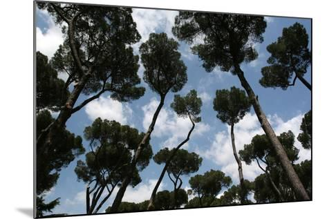 Tuscan Trees Clouds-Robert Goldwitz-Mounted Photographic Print