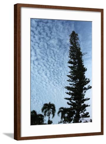 Cedar Palm Sky Vertical-Robert Goldwitz-Framed Art Print