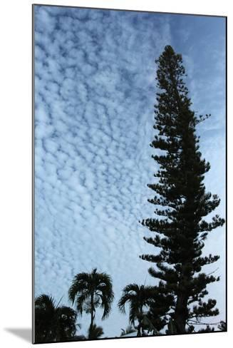 Cedar Palm Sky Vertical-Robert Goldwitz-Mounted Photographic Print