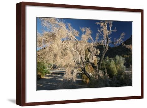 Desert Brilliance-Robert Goldwitz-Framed Art Print