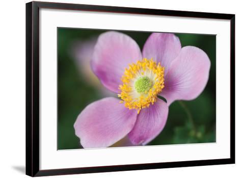 Anemone II-Erin Berzel-Framed Art Print