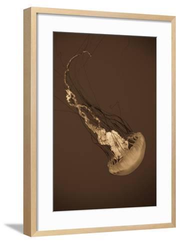 Sea Nettle III-Erin Berzel-Framed Art Print