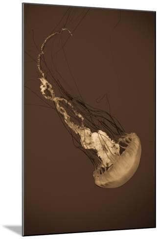 Sea Nettle III-Erin Berzel-Mounted Photographic Print