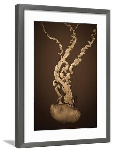 Sea Nettle IV-Erin Berzel-Framed Art Print
