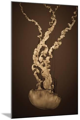 Sea Nettle IV-Erin Berzel-Mounted Photographic Print
