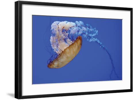 Jellyfish VIII-Erin Berzel-Framed Art Print