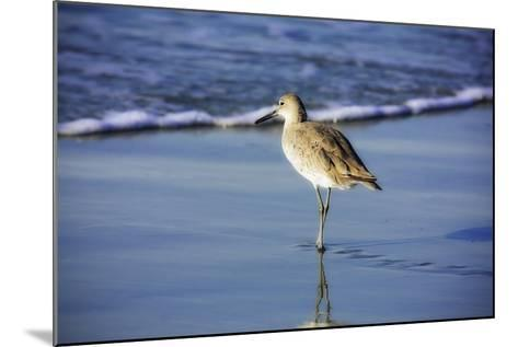 Sandpiper in the Surf I-Alan Hausenflock-Mounted Photographic Print