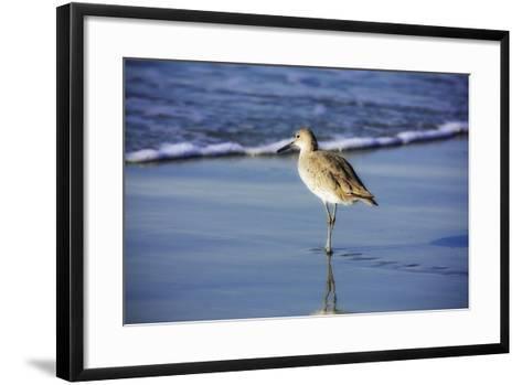 Sandpiper in the Surf I-Alan Hausenflock-Framed Art Print