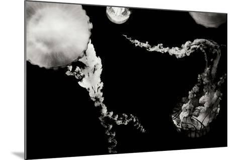 Jellyfish Glow VIII-Erin Berzel-Mounted Photographic Print