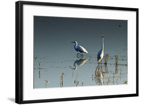 Early Morning Egrets 2-Alan Hausenflock-Framed Art Print