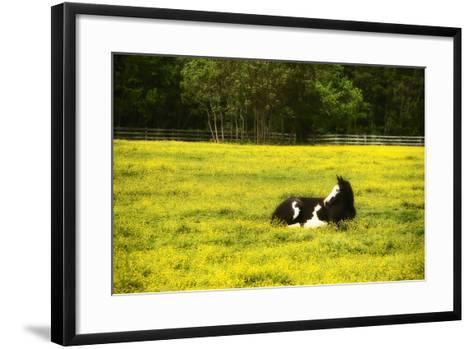 Black Pinto I-Alan Hausenflock-Framed Art Print