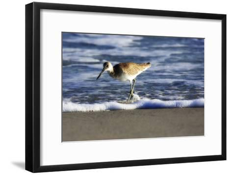 Sandpiper in the Surf III-Alan Hausenflock-Framed Art Print