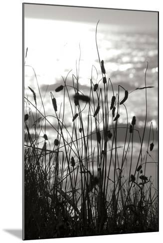 Coastal Grass I-Erin Berzel-Mounted Photographic Print