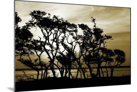 Blissful Shore II-Alan Hausenflock-Mounted Photographic Print