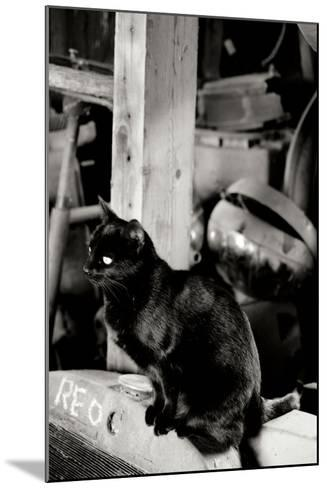 Farm Cat-Erin Berzel-Mounted Photographic Print