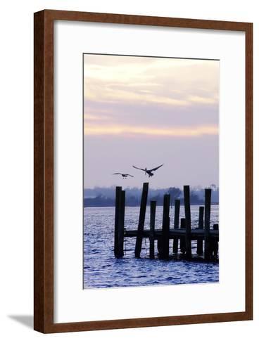 Pelican and Friend-Alan Hausenflock-Framed Art Print