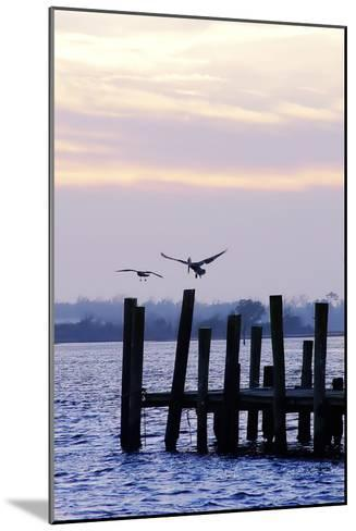 Pelican and Friend-Alan Hausenflock-Mounted Photographic Print