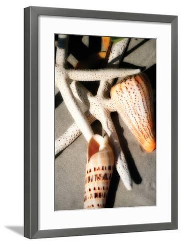 Shells by the Sea I-Alan Hausenflock-Framed Art Print