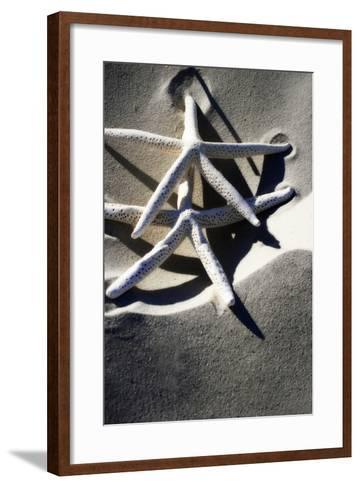 Sea Stars I-Alan Hausenflock-Framed Art Print