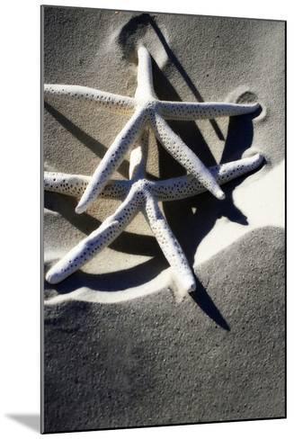 Sea Stars I-Alan Hausenflock-Mounted Photographic Print