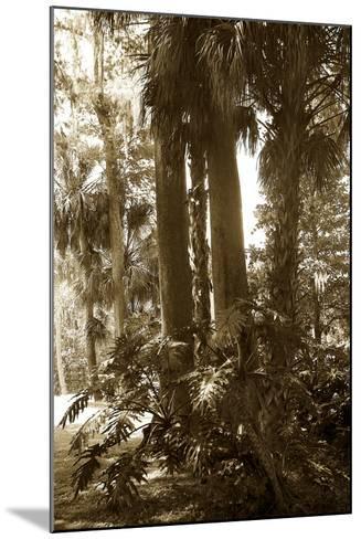 Tropical Garden 2-Alan Hausenflock-Mounted Photographic Print