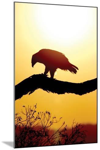 Tawny Sunrise-Susann Parker-Mounted Photographic Print
