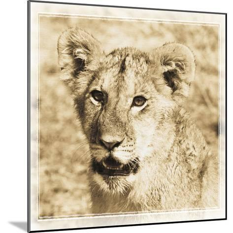 Young Africa Lion-Susann Parker-Mounted Photographic Print