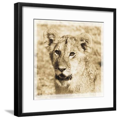 Young Africa Lion-Susann Parker-Framed Art Print