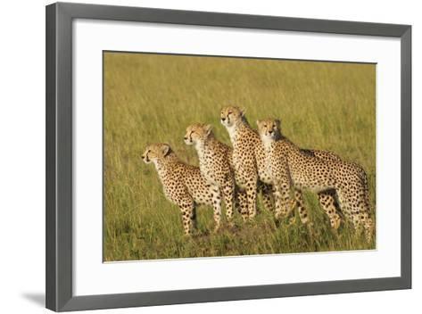 Four of a Kind-Susann Parker-Framed Art Print
