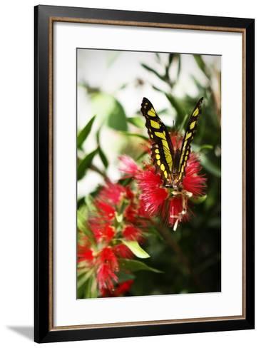 Baird's Swallowtail I-Alan Hausenflock-Framed Art Print