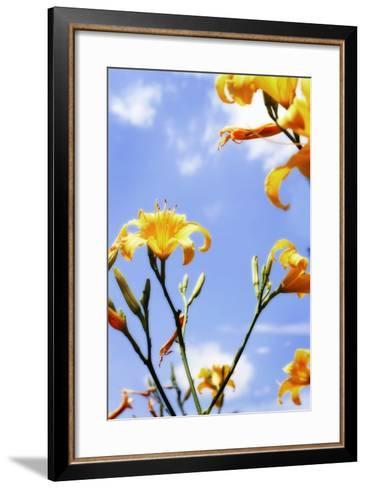 Daylilies-Alan Hausenflock-Framed Art Print