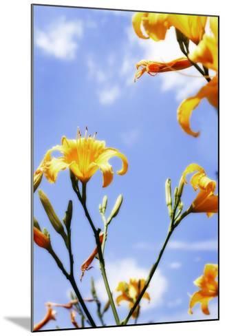 Daylilies-Alan Hausenflock-Mounted Photographic Print